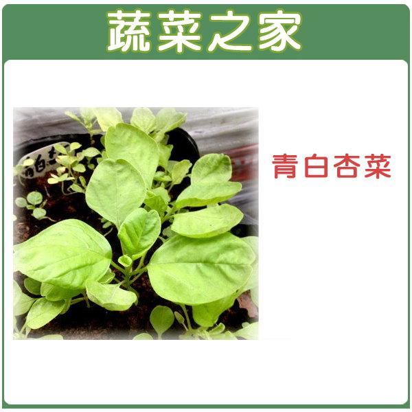 【蔬菜之家】A33.青白杏菜種子15000顆