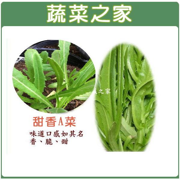 【蔬菜之家】A34.甜香A菜種子1500顆(日本進口,口感爽脆香甜)