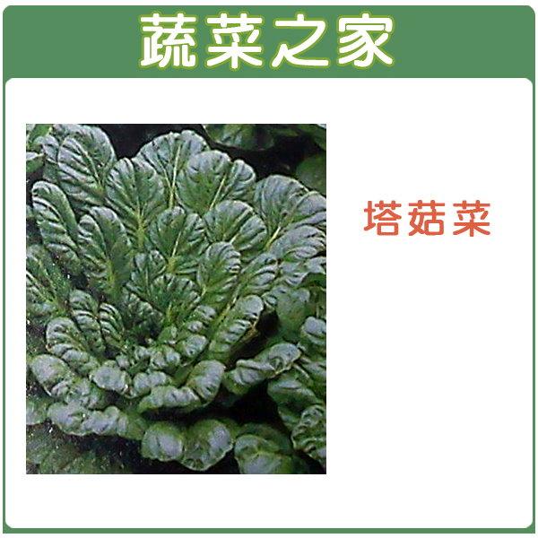 【蔬菜之家】A39.塔菇菜種子800顆(日本進口蹋稞菜 、烏塌菜)