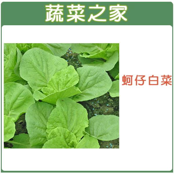 【蔬菜之家】A45.蚵仔白菜種子450顆