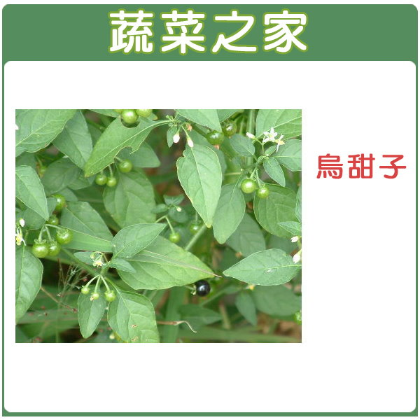 【蔬菜之家】A47.烏甜子(龍葵)種子3000顆