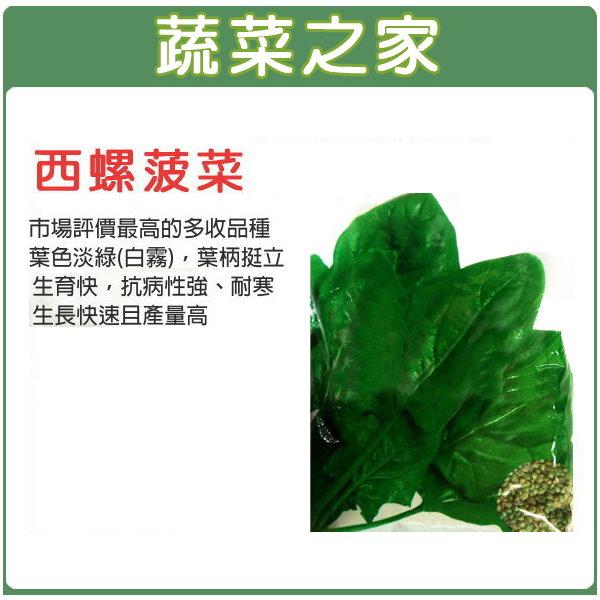 【蔬菜之家】大包裝A58西螺菠菜種子120克