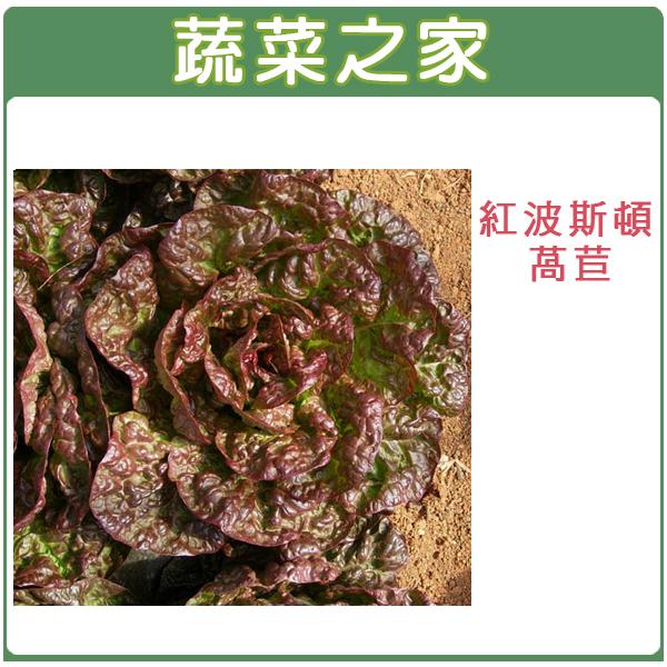 【蔬菜之家】A71.紅波斯頓萵苣種子1500顆