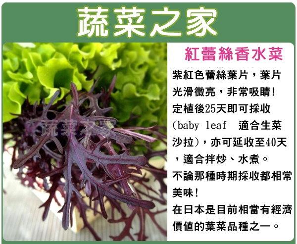 【蔬菜之家】A76.紅蕾絲香水菜種子