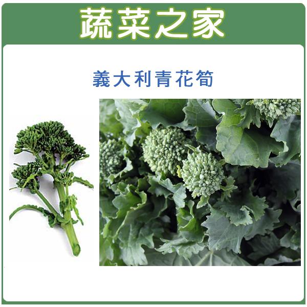 【蔬菜之家】B24.義大利青花筍種子100顆
