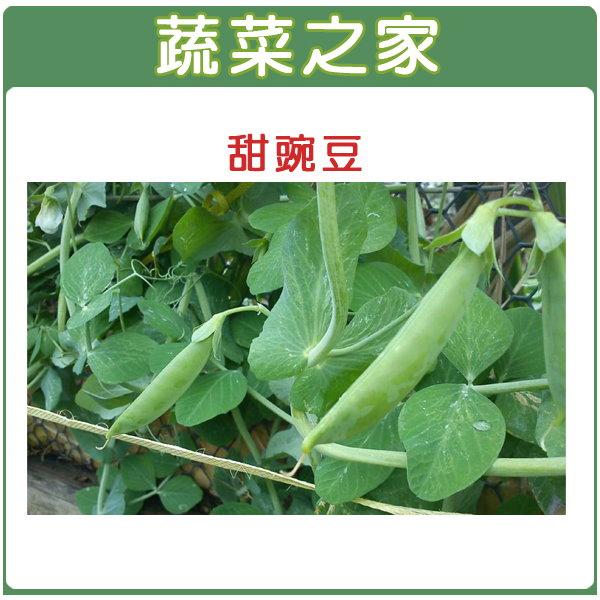 【蔬菜之家】E03.甜碗豆 (嫩豆)種子100顆
