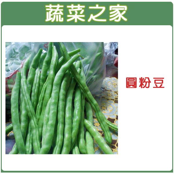 【蔬菜之家】E06.圓粉豆(壞豆)種子80顆