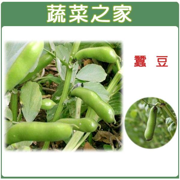 【蔬菜之家】E11.蠶豆種子20顆