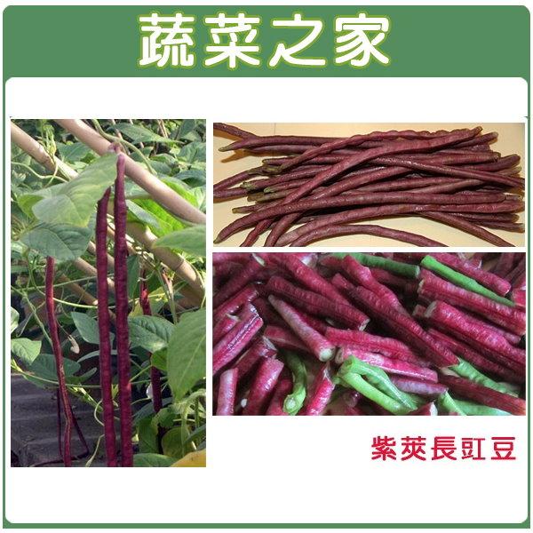 【蔬菜之家】E15.紫莢長豇豆種子
