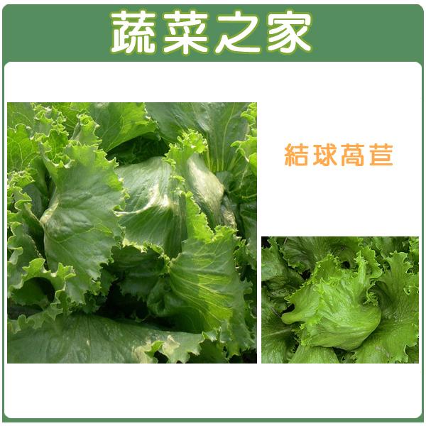 【蔬菜之家】B05.結球萵苣種子1500顆