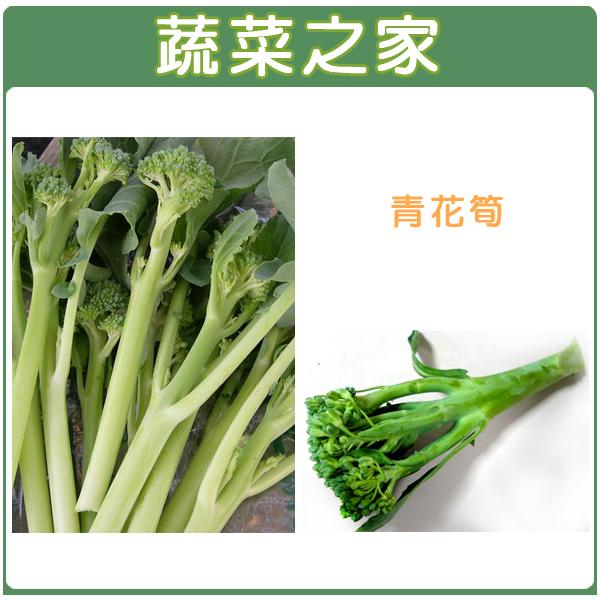 【蔬菜之家】B07.青花筍種子12顆