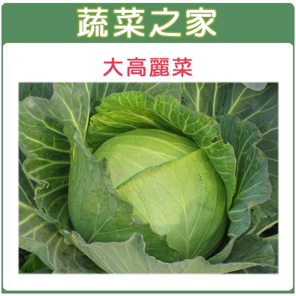 【蔬菜之家】B08.大高麗菜種子50顆