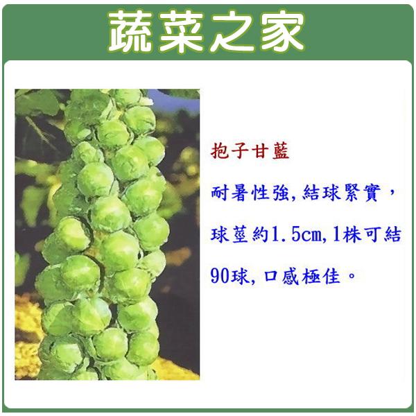 【蔬菜之家】B10.抱子甘藍種子100顆