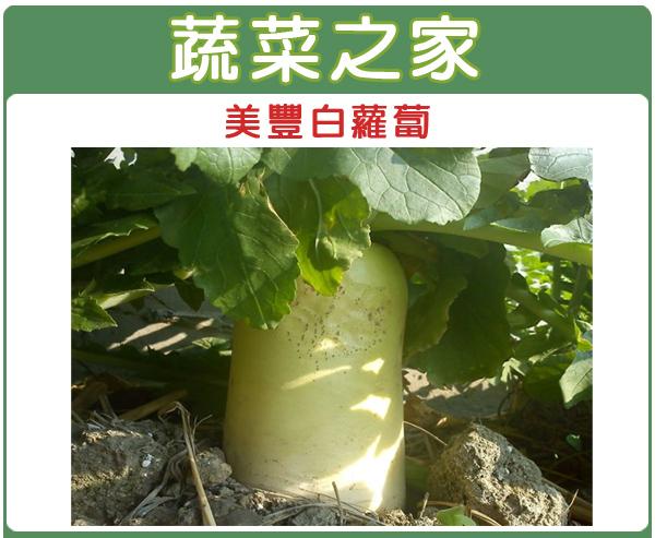 【蔬菜之家】C03.美豐白蘿蔔種子50顆  (日本進口超雲大根)