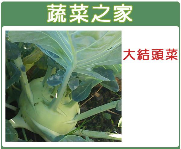 【蔬菜之家】C08.大結頭菜種子10顆