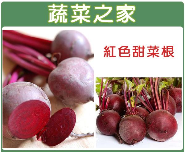 【蔬菜之家】C09.紅色甜菜根種子100顆