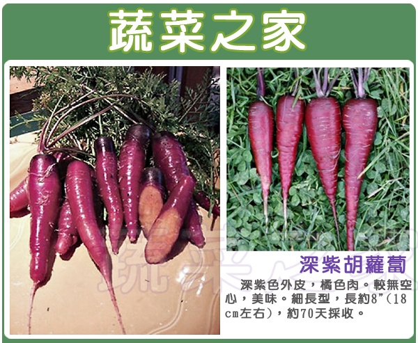 【蔬菜之家】C21.深紫胡蘿蔔種子30顆