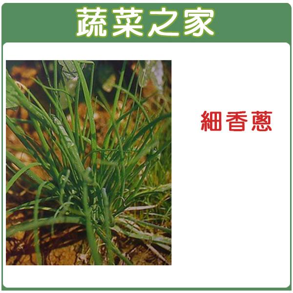 【蔬菜之家】D01.細香蔥種子200顆