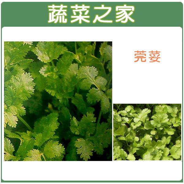 【蔬菜之家】F04.芫荽(香菜) 種子500顆(1顆破殼後有2粒種子)