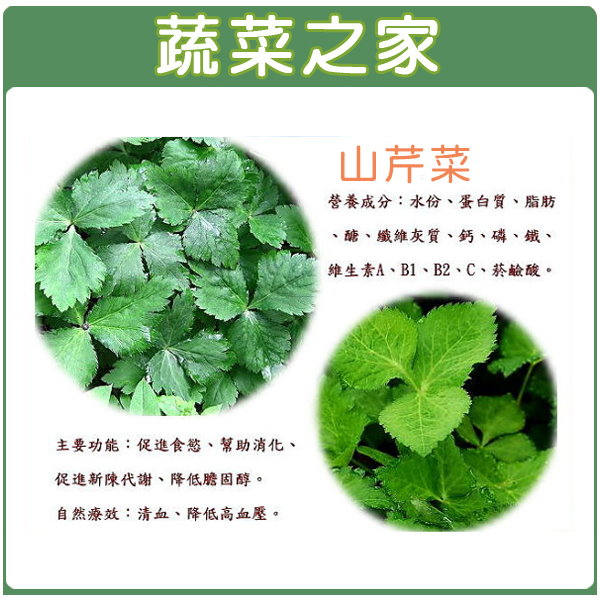 【蔬菜之家】F05.山芹菜(鴨兒芹)種子500顆