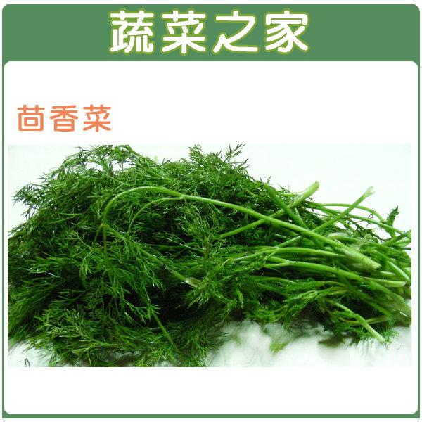 【蔬菜之家】F07.茴香菜種子8000顆