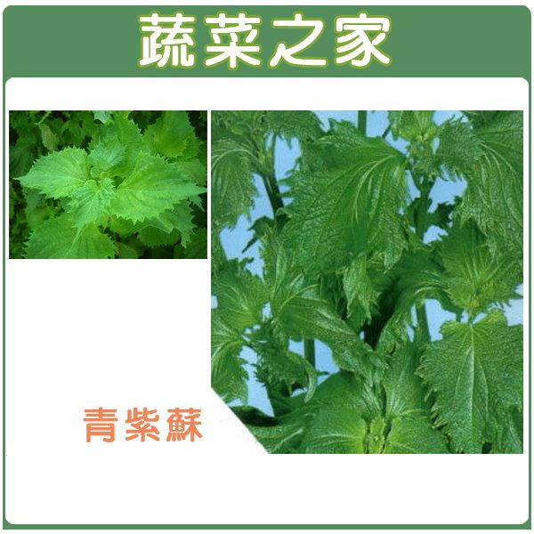 【蔬菜之家】F09.青紫蘇種子500顆(青香,日本進口)
