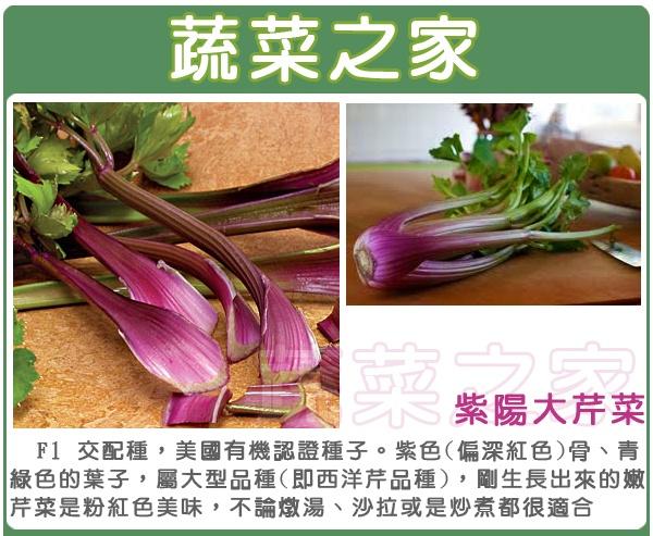 【蔬菜之家】F15.紫陽大芹菜種子