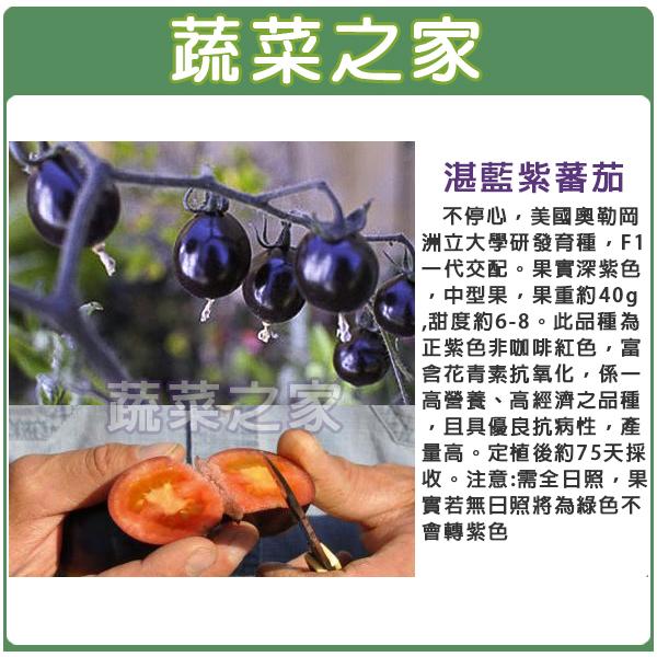 【蔬菜之家】G87.湛藍紫蕃茄種子1顆