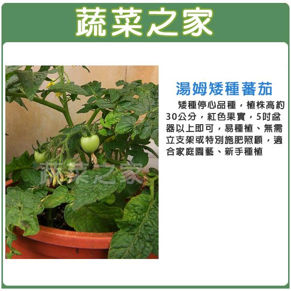 【蔬菜之家】G88.湯姆矮種蕃茄種子