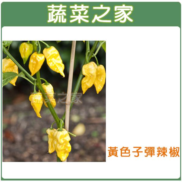 【蔬菜之家】G90.黃色子彈辣椒種子