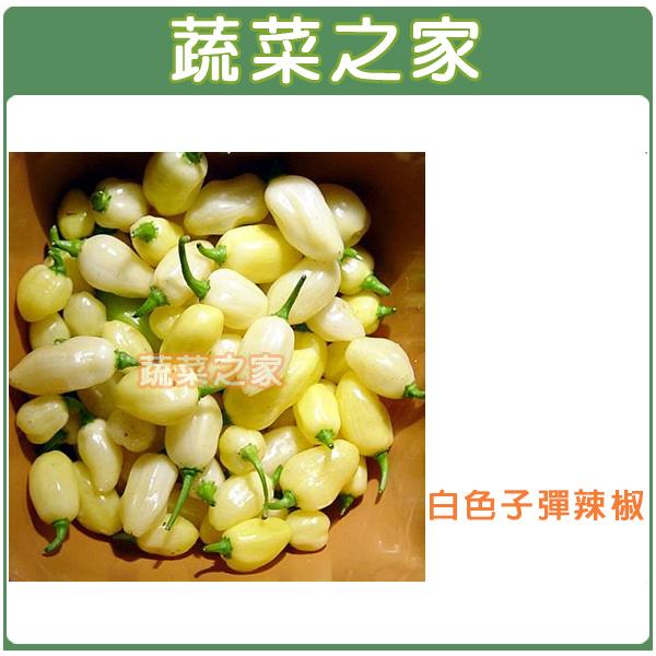 【蔬菜之家】G93.白色子彈辣椒種子