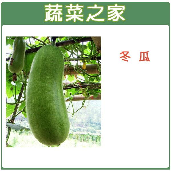 【蔬菜之家】G09.冬瓜 (青殼長冬瓜)種子20顆