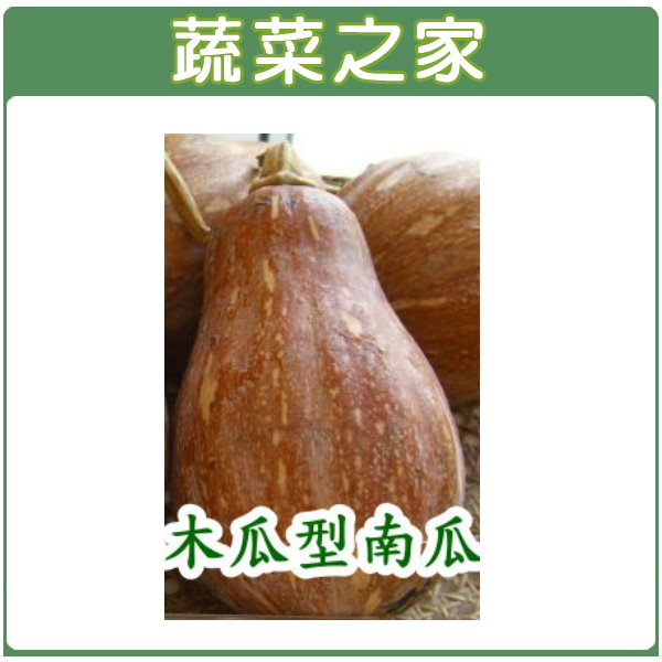 【蔬菜之家】G14.南瓜(木瓜型金瓜)種子 20顆