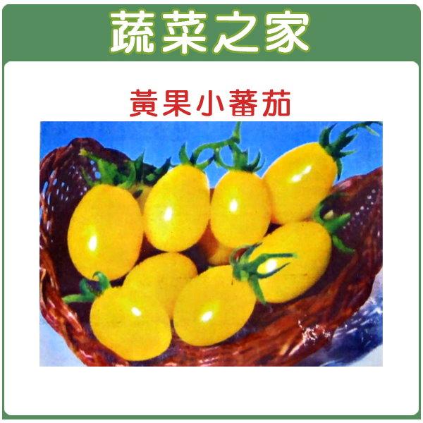 【蔬菜之家】G21.黃果小番茄種子10顆