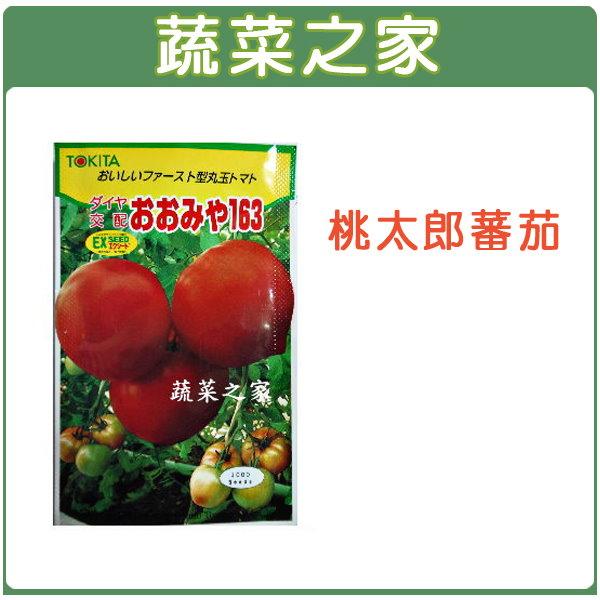 【蔬菜之家】G22.桃太郎番茄種子5顆