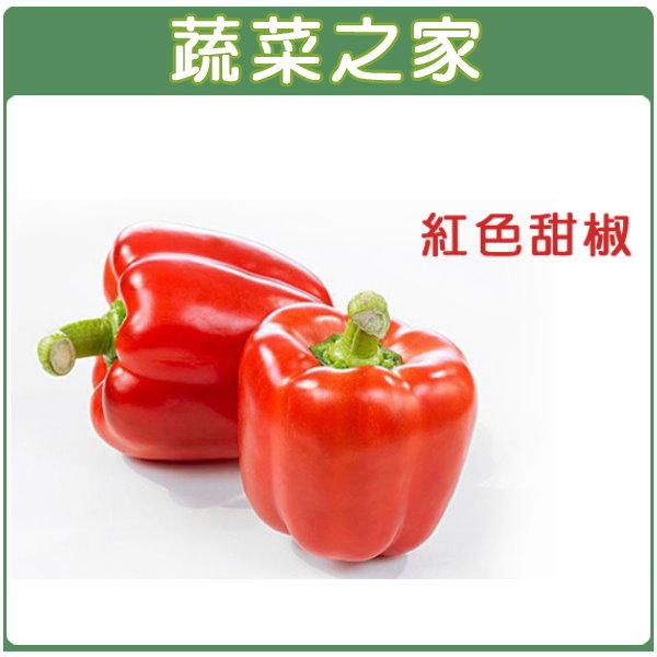 【蔬菜之家】G25.紅色甜椒 (紅麗星)種子1顆