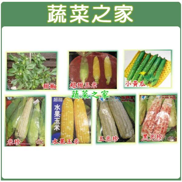【蔬菜之家】大包裝G27.本土糯玉米種子400克