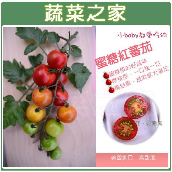 【蔬菜之家】大包裝G98.蜜糖紅蕃茄種子20顆