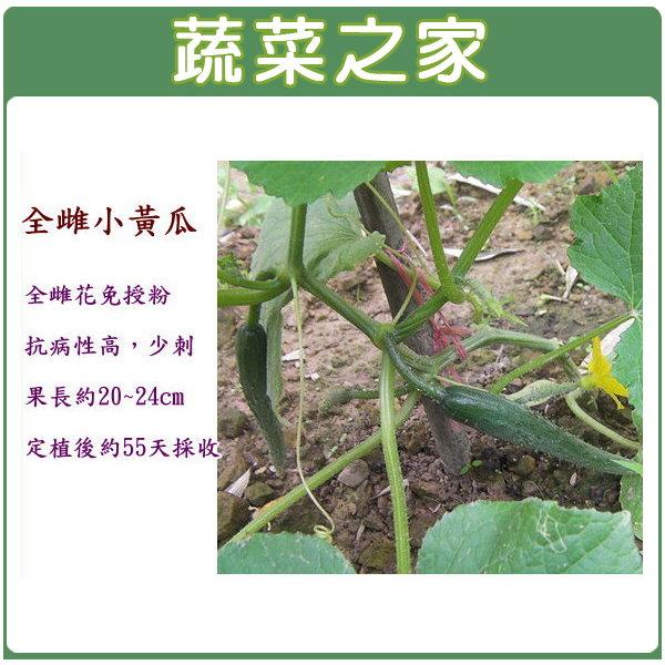 【蔬菜之家】G38.全雌小黃瓜種子2顆