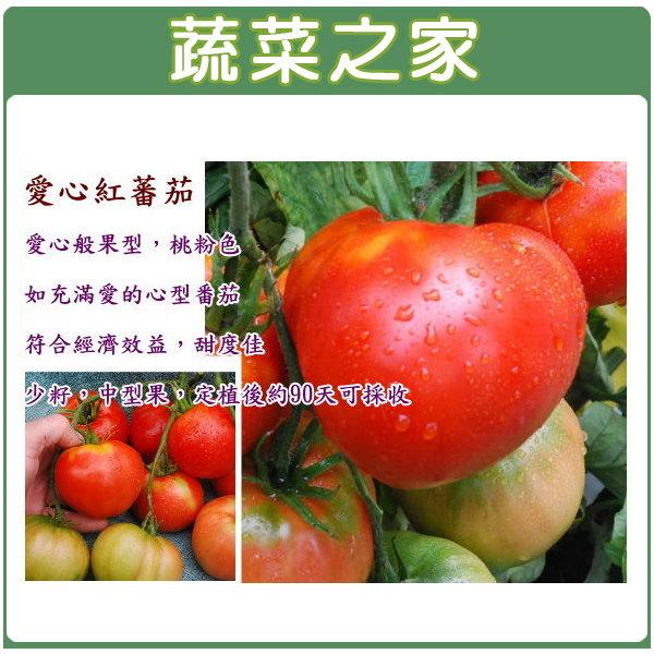 【蔬菜之家】G52.愛心紅蕃茄種子10顆