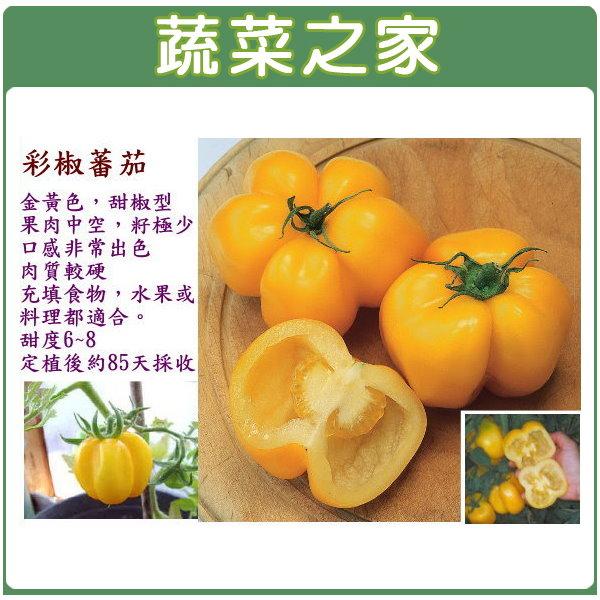 【蔬菜之家】大包裝G55.彩椒蕃茄(黃色)種子0.45克(約150顆)