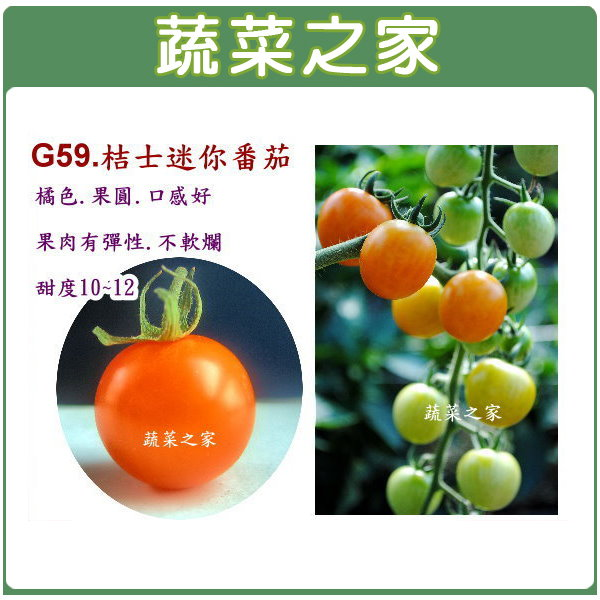 【蔬菜之家】G59.桔士迷你番茄(橘色)5顆