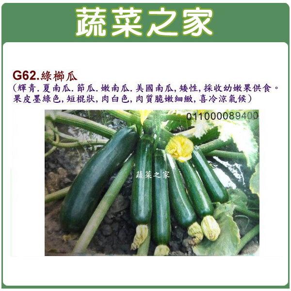 【蔬菜之家】G62.綠櫛瓜種子3顆(輝青.夏南瓜.節瓜.嫩南瓜.美國南瓜)