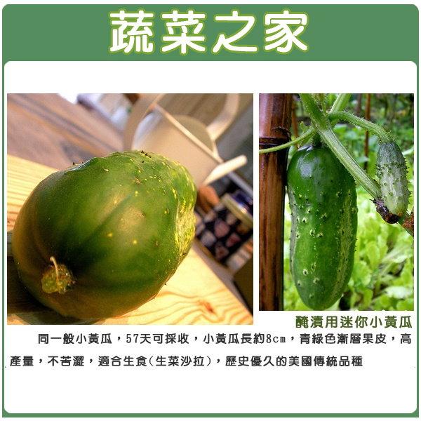 【蔬菜之家】G82.醃漬用小黃瓜種子