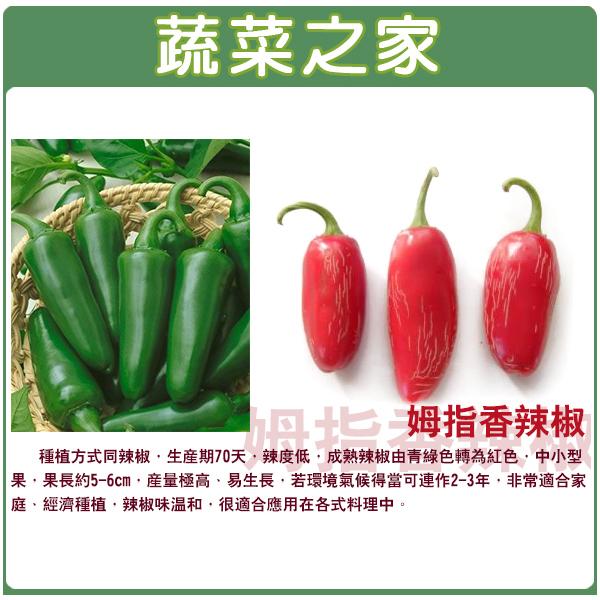【蔬菜之家】G95.姆指香辣椒種子10顆
