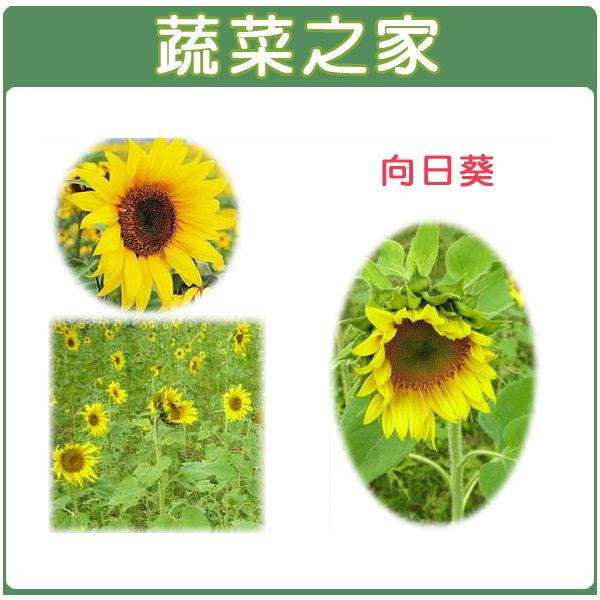 【蔬菜之家】H01.向日葵種子150顆