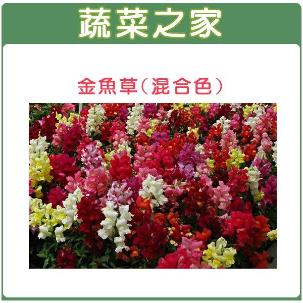 【蔬菜之家】大包裝H14.金魚草(混合色,高15cm)種子2400顆