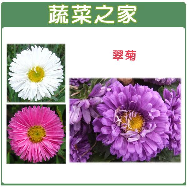 【蔬菜之家】大包裝H21.翠菊(蜜蕾,混合色,高25cm)種子450顆