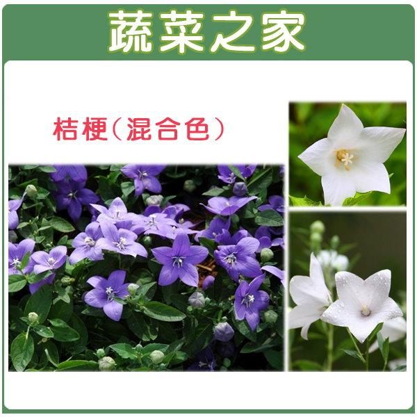 【蔬菜之家】H35.桔梗(混合色,高30~50cm)種子30顆