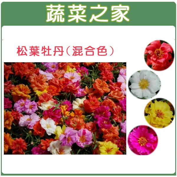 【蔬菜之家】H37.松葉牡丹(混合色,匍匐性)種子30顆